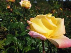 3-1379493462-4-rose-garden